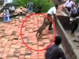Video : Watch: Leopard incites panic in Maharashtra village