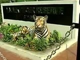 Video : Valmiki Tiger Reserve - The Resurgence