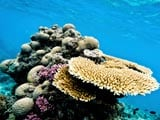 Watch the Marine Life at The Great Barrier Reef in Australia