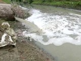 Video: Maa Ganga: Killing Her Softly - Kanpur And Haridwar