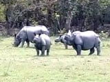 Video: 22 Rhinos Killed at Kaziranga This Year; Minister Promises Action