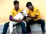 Video: Save the Dog, Save the Tiger