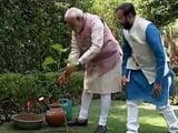 Video: On World Environment Day, PM Modi Plants a Sapling