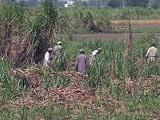 Videos : सरकार ने गन्ना किसानों के लिए राहत पैकेज मंजूर किया