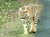 Video: NDTV-Aircel Save Our Tigers Campaign - Season 4 Begins