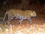 Video: मुंबई : संजय गांधी उद्यान में बढ़ी तेंदुओं की संख्या