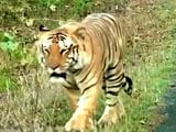Video: The Fight to Save Our Tiger is Not Over, the Fight Has Just Begun
