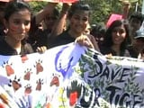 Video: World Tiger Day 2015: Kids for Tigers Rally in Chennai
