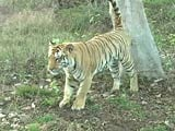 Video : Should Umred Kharandla be Declared Tiger Reserve?