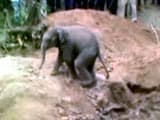 Video : Separated from Mother, Baby Elephant Falls in a Dry Well