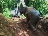Video : A Village Came Out To Save This Baby. It's An Elephant