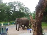 Video : Help, a Herd of Elephants Heading Straight for Us