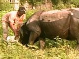 Video: How This Ex-Poacher has Taken to Conservation of Assam's One Horned Rhino