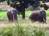 Video : छत्तीसगढ़ : अब तक तीन लोग हाथियों के हुए शिकार