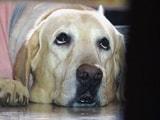 Video : कुत्ते को लिफ्ट में ले जाने पर 5 लाख रुपये का जुर्माना
