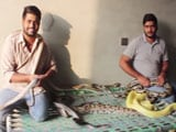 Video: These Two Pakistani 'Python Brothers' Live With Over 100 Snakes