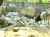 Video: A Special Report on India's Swachh Index