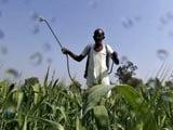 Video : PM Modi's New Crop Insurance Scheme Reaches Out To Farmers