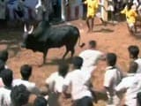 Jallikattu: Tamil Nadu Farmers Still Hopeful Despite Top Court's Stay