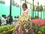 Video: Bengaluru's Flower Lovers Keep Their Date With Lalbaugh Gardens