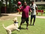 Video : Adopt a Dog to Stay Fit