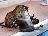 Video : Leopard At Bengaluru School Injures 4, Brawls Near Pool