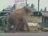 Video : Caught On Video, A Wild Elephant Tears Through A Bengal Town