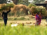 Video : Women as a Driving Force in Farm Sector: A Story