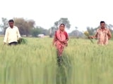 Video: Financial Crisis Being Faced by Farmers in India