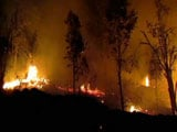 1 Arrested For Forest Fires Around Kodaikanal In Tamil Nadu