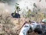 Video : छत्तीसगढ़ : महासमुंद में जंगली भालू को मारने के लिए चली 100 गोलियां