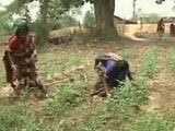Video: Seed Banks: Enhancing Sustainability of Small Scale Farmers in Odisha