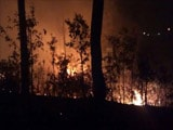 Uttarakhand Fires: Natural Or Man-Made Disaster?