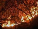Video: 10 बातें : उत्तराखंड के जंगलों में लगी आग