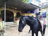Video: राहगीर को घोड़े ने किया गंभीर रूप से घायल, चश्मदीद नहीं पहचान पा रहे 'हमलावर' को