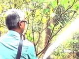 Video: Rainwater Harvesting: Thane Residents Show The Way