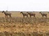 Video: 200 Nilgai Shot. Required, Says One Minister. Unacceptable, Says Another