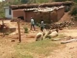 Video: In 3 Villages Near Jammu, 3,000 People Live Without A Road