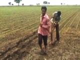 Video : किराये पर बैल लेने के लिए नहीं हैं पैसे, किसान ने बेटे को खेत में जोता