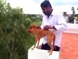 Video : Chennai Enraged, Hunts For Med Student Who Threw Dog 5 Storeys