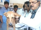 Video : Chennai Dog Safe, Torturers Suspended By Medical College