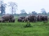 Video : जब एक साथ आ गए 100 हाथी और सड़क पर निकला शेरों का झुंड