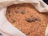 Video : For Flood Victims In Bhopal, Bags Of Wheat Come With Stones, Mud
