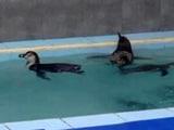 Video: मुंबई : भायखला ज़ू लाई गईं 8 पेंग्विन, सामाजिक कार्यकर्ता कर रहे विरोध
