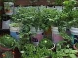 Video: What's Trending: Organic Terrace Gardens