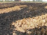 Video: पंजाब के खेतों में खूंटी जलाने से बढ़ा प्रदूषण