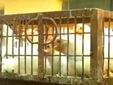 Video : Delhi's Bird Flu Outbreak From A Weaker Strain This Time, Say Experts