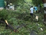 Chennai Recovers After Cyclone Vardah, 10 Dead