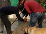 Video : More Than 600 Cops, Sniffer Dogs Sweep JNU Campus To Find Missing Student