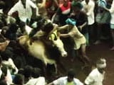 Video: For Jallikattu In Pongal, Panneerselvam Asks PM Modi To Issue Executive Order